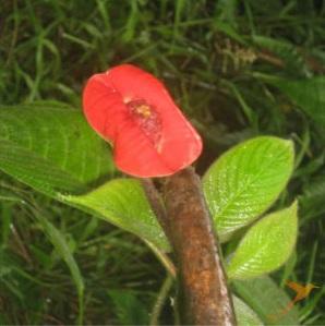 Podocarpus-national-park