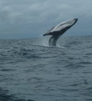 With some luck you can spot whales in the pacific ocean.