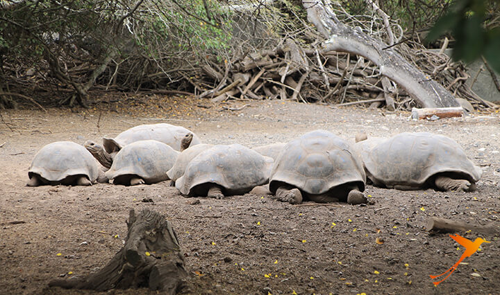 Arnaldo Tupiza tortoise breeding centre Galapagos Gruise