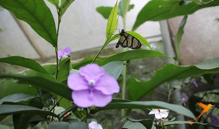 Schmetterling-min