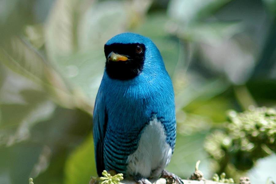 The ecuadorian cloudforest is a birdwatchers paradise