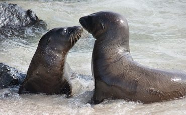 Observe Sea lions on your Galapagos trip with your kids
