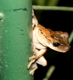 You can discover tiny animals in the rainforest of Ecuador.