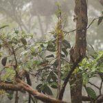 Bird cloud forest ecuador