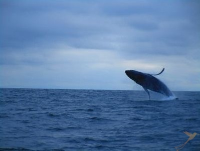You can go on whale watching tours starting in Puerto Lopez