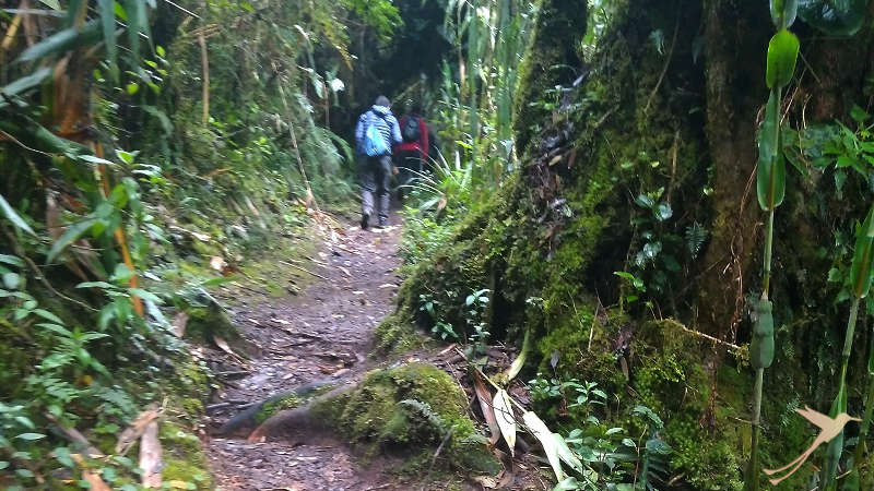 The Yanacocha reserve near Quito is ideal for hikes in the cloud forest.