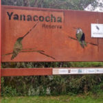 inside the Yanacocha reserve you can find a big variety of hummingsbirds.