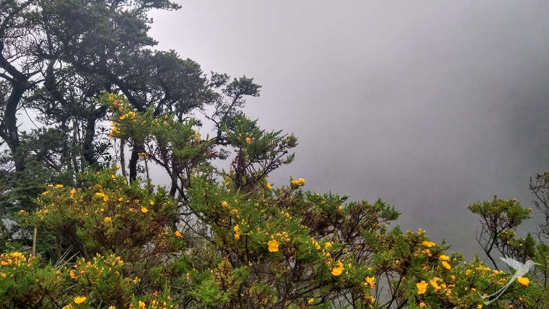 The Yanacocha reserve is located in the cloud forest region of Ecuador.