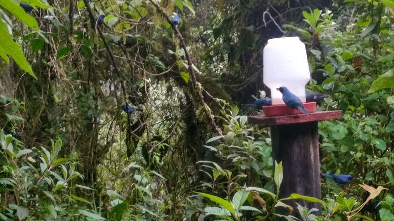 Observe colorful hummingbirds in their natural habitat in the Yanacocha reserve