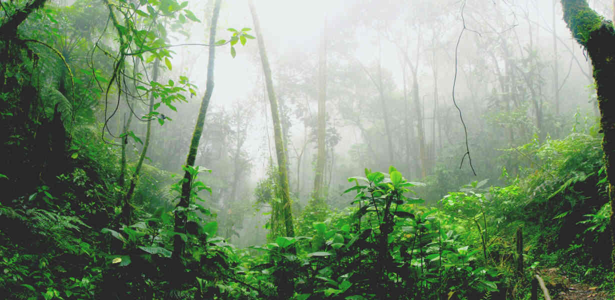 the cloudforest is a very biodiverse zone
