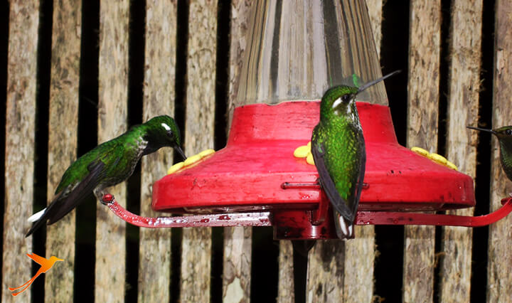 Birdwatching - What do to in Mindo