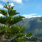 Christmas time in Ecuador is also green.