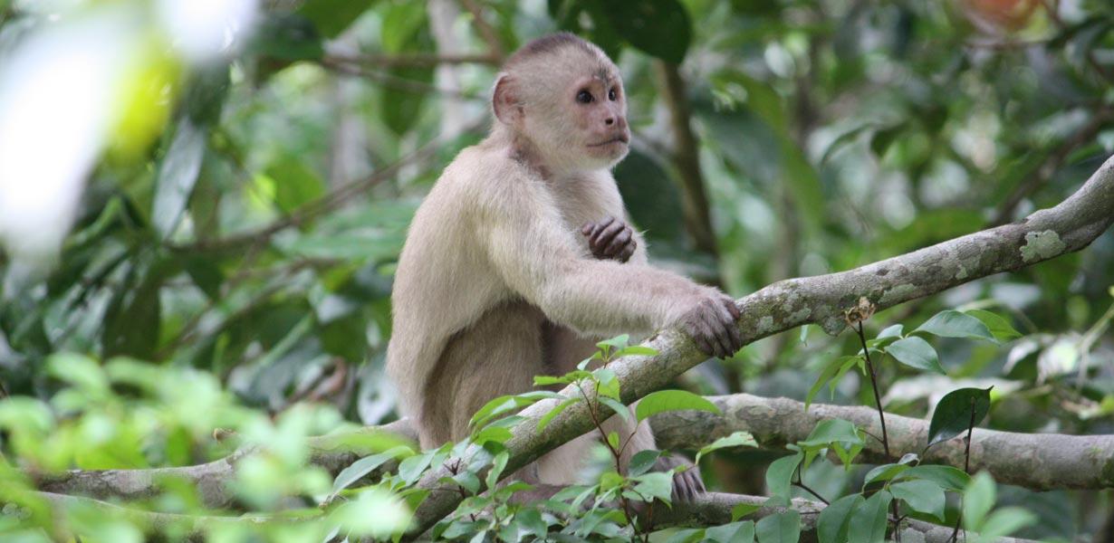 Amazon Rainforest, Private tour Ecuador, Soleq Travel, Exotic Animal