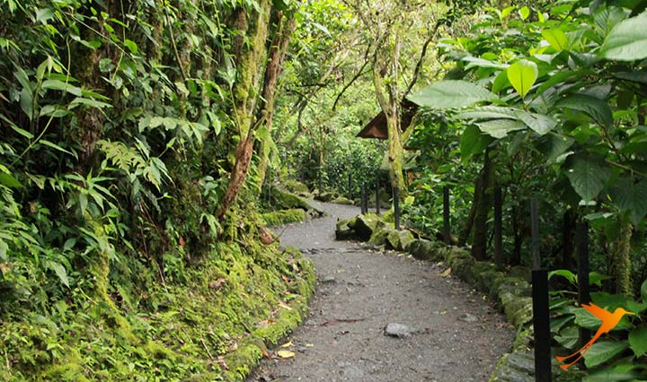 Forest in Baños