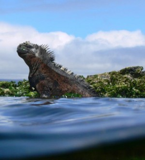 Galapagos Islands Tours, Isabela Island, Ecuador, Soleq Travel, Galapagos Islands private tours