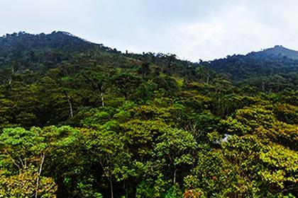 jocotoco reserve environmental project