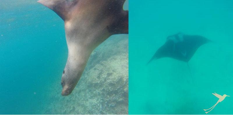 Discover amazing marine life on Santa Cruz Island