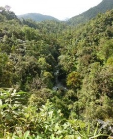 The cloud forest is a biodiversity hot spot.