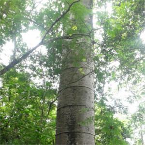 puyango-petrified-forest