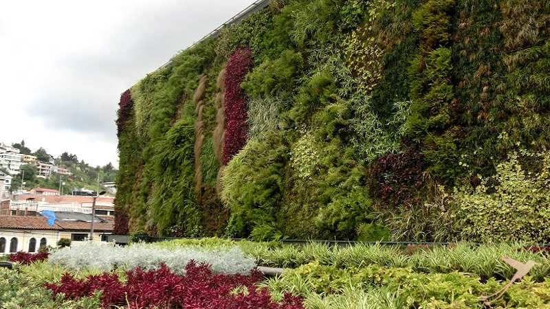 Green walls and roofs are becoming popular in quito because of the rising eological awareness.