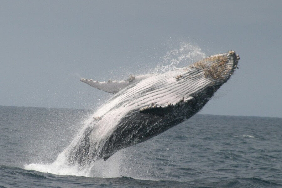 You may even observe whales on a tour to the coast with SOLEQ.travel.