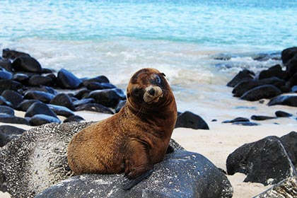 sea lion baby in Galapagos